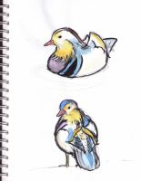 mandarin ducks by dragonlover-samantha