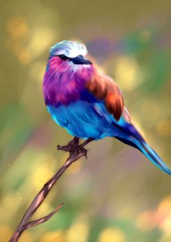 Lilac Breasted Roller by Mellodee