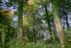 HDR Forest - I by MD-Arts