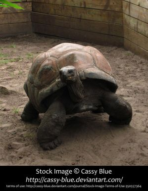 Giant Tortoise Stock 9 by Cassy-Blue