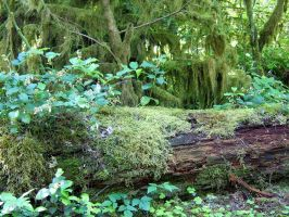 Oregon Rainforest by CoffeeDaze