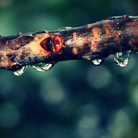 wet branch? by itsRisingLove