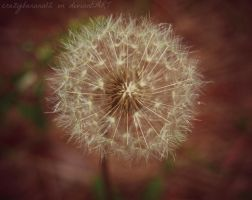 New Camera Shots- Yet Another Wish by hourglass-paperboats
