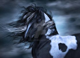 Gypsy Vanner by sylki51