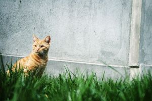 cat in the grass. by the-wabbit