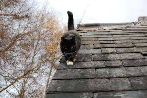 Cat on Roof by Mararda