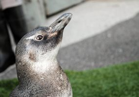 Penguin Pic by Fritters