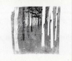 woodland monoprint by emm4239