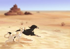 Salukis in the Desert by Ellakins