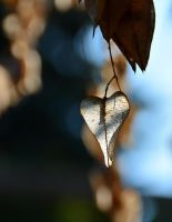 Dry Heart-1 by Placi1