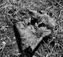 Survival of last year Fall by Baltagalvis