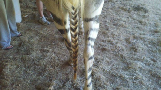 Her zebra tail..Well the best we could do! by LindiMaze