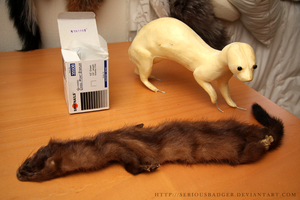 Stuffing a mink by seriousbadger