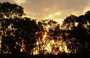 sunset trees. by Shutter-Bug1