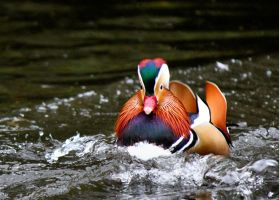 Mandarin Charge by AJKent