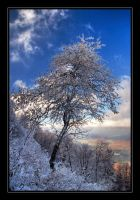 Winter is coming by joffo1