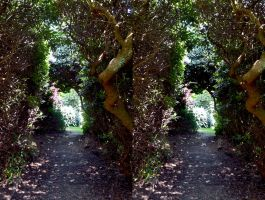 Rhododendron Wood Path Dry Brush Paining In Stereo by aegiandyad