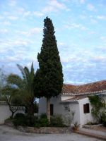 tree in front of the house by archaeopteryx-stocks