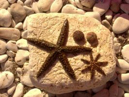 Starfish by Milkyway84