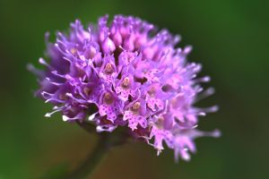 Planet Orchis by organicvision