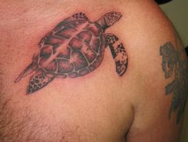 turtle by rogerbusque