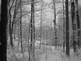 A Dusting of Snow I by bbwannabe