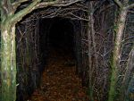 Inside the Hedge by Ballisticvole