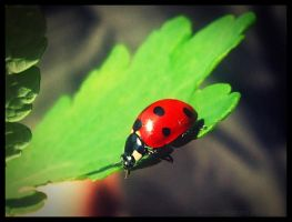 Ladybug II by And-I-Walk-Alone