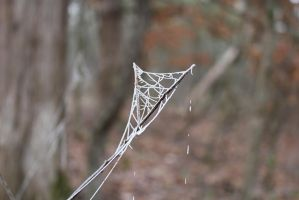 Frosted Webs by MorganGaits