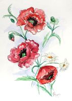 Poppies and Daisys by Cecilia-Pekelharing