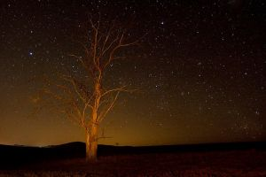 Stars and a tree by carlosthe