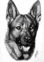 German Shepherd TATTOO by Yankeestyle94