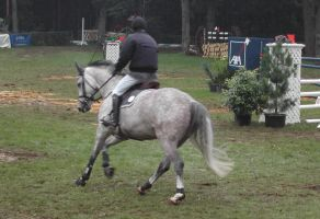 Competition horse 7 by Stock-gallery