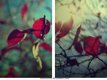 Autumn Leaves by colouralive