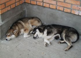 Sweet dogs dreams by Villainess-Vi