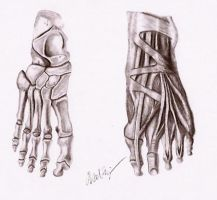 Skeletal and Muscular Feet by midni6htf4iry
