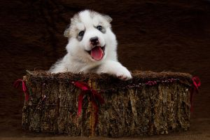 Happy Puppy by DeingeL-Dog-Stock