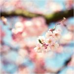 A Hello From Spring by Hantenshi