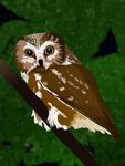 Just an Owl by Armaya
