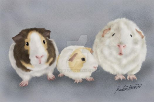 Three Little Guinea Potatoes Commission by higesblue