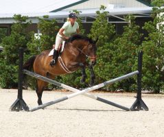 Little Jump and Big Horse by zippostock