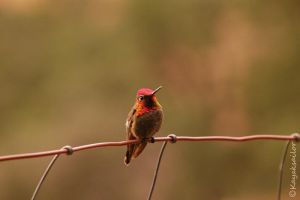 Hummer Sunset by kayaksailor