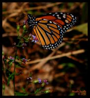 Monarch by chemical-mischa