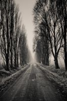 road to nowhere II by torobala