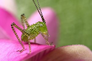 """bush cricket series"" by macrojunkie"