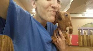 Chorizo, the wiener dog puppy by ChibiEricka