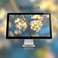 Blossom Wallpaper (4k) by rudolfzz111