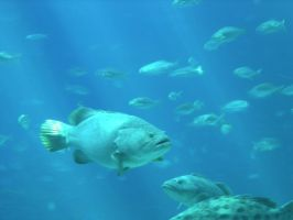 fish background by group-stock