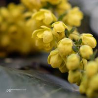 behaving in yellow by akthuro