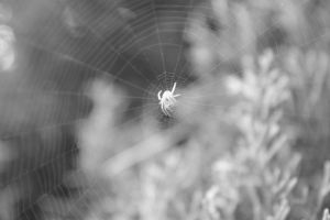 Day 31:Spider and his web :BW: by YaoiTeachings101
